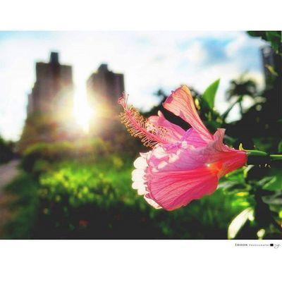 【 Hope 】 一抹 充滿希望的光 盡全力地撒在 五味的情緒 和未知的劇情 沉澱後發現 原來我們都擁有更美的希望 回家 Flower 365Snap Light Hope