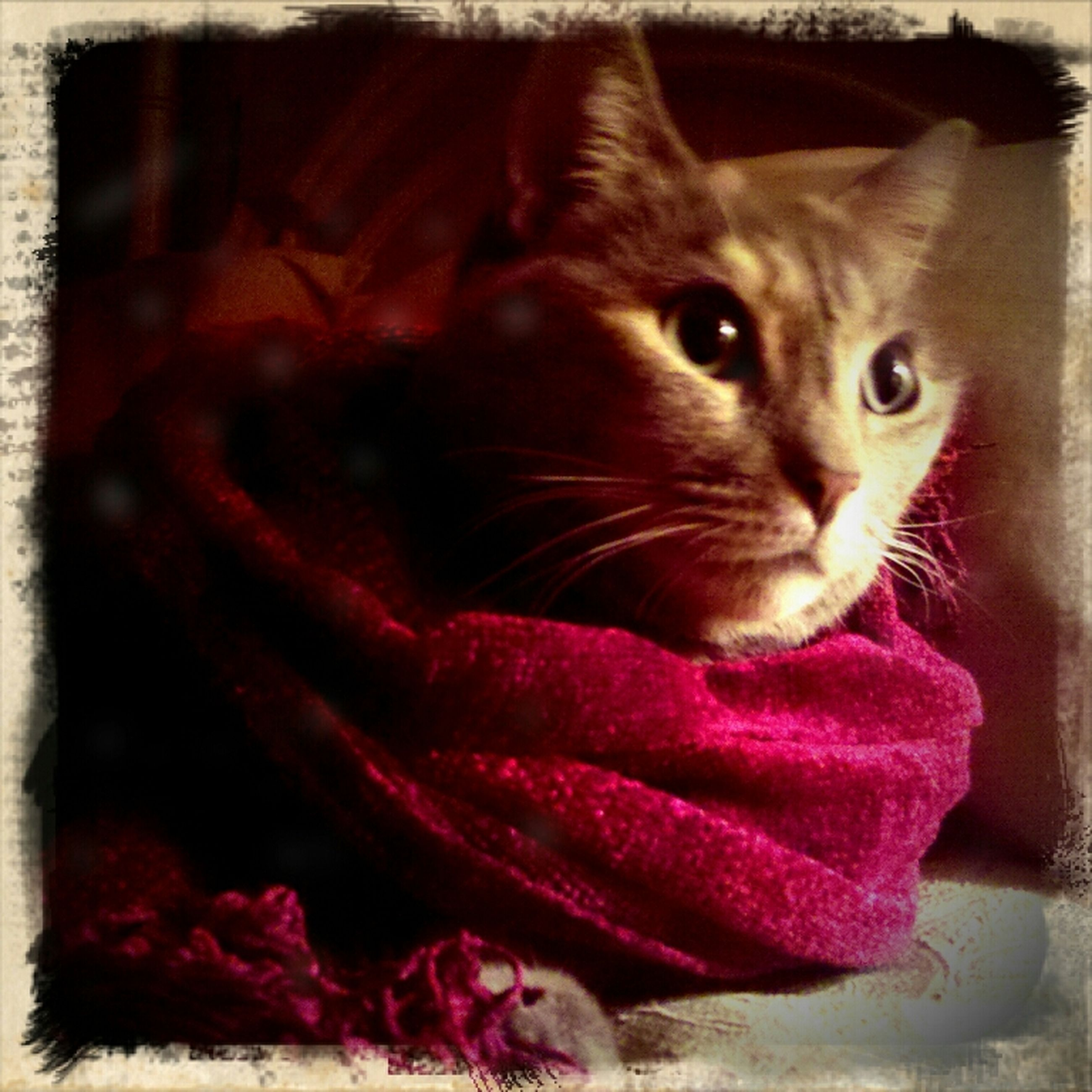 pets, domestic animals, one animal, animal themes, domestic cat, indoors, cat, feline, close-up, mammal, looking at camera, portrait, whisker, home interior, pink color, auto post production filter, flower, transfer print, no people, bed