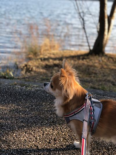 EyeEm Selects Animal Themes Animal One Animal Mammal Canine Vertebrate Domestic Animals Pets Dog Nature Domestic Focus On Foreground No People Collar Leash Pet Leash Day Brown Outdoors Pet Collar