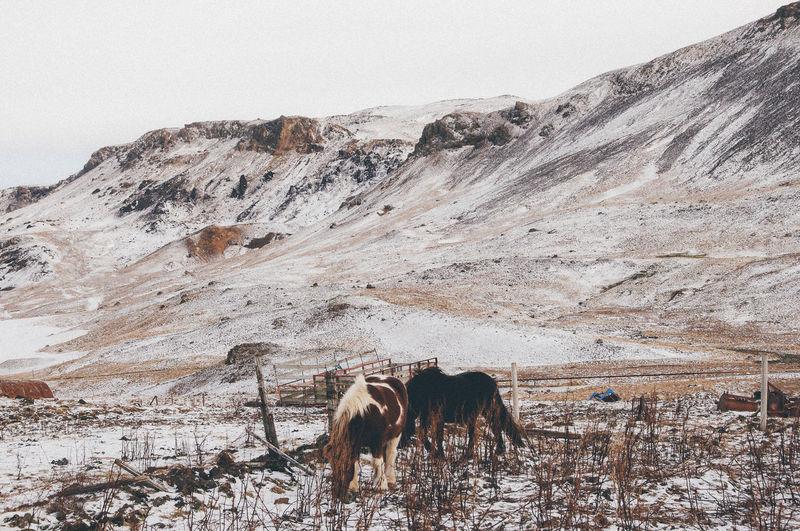 Horse on snow field against sky