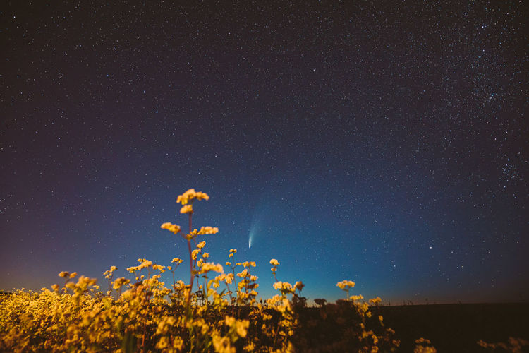Low angle view of flowers against sky at night