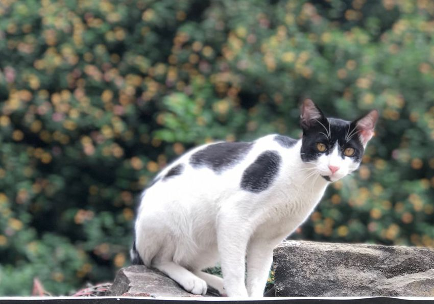 Mammal Pets Domestic Domestic Animals One Animal Feline