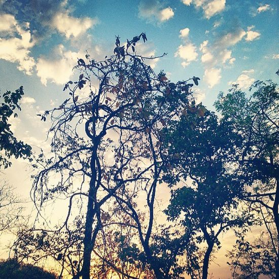 Sunday morning. Bandhavgarh