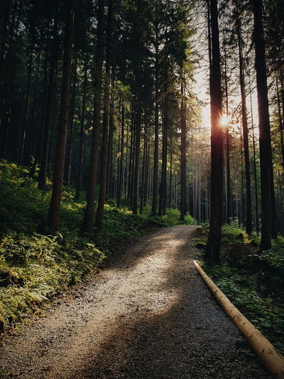 Road amidst trees in forest against bright sun