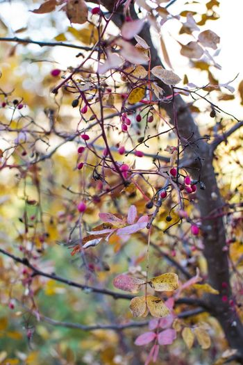 Colors Day Focus On Foreground Growing Meteora Meteora Greece Nature No People Outdoors Pink Showcase: December Wild Rose Winter Leaves Yellow