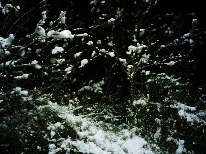 Immun gegen Kälte und Frost führt mein Weg mich durch die Dunkelheit Walking Around First Eyeem Photo