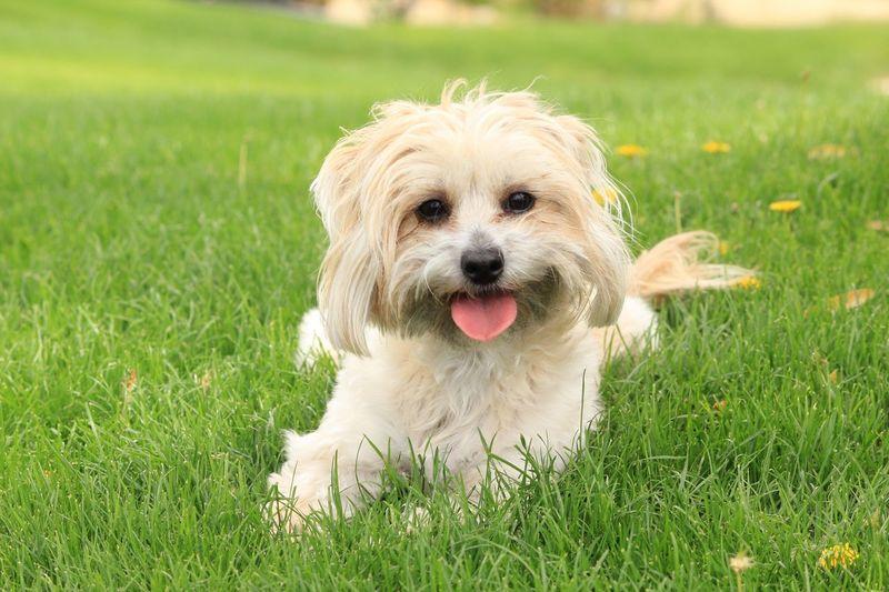 Pets Dog Grassy