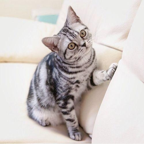 Petit chat trop chou !