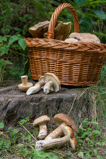 Basket Container Day Edible Mushroom Field Food Food And Drink Fungus Grass Green Color Growth Land Mushroom Nature No People Outdoors Plant Representation Toadstool Tree Vegetable