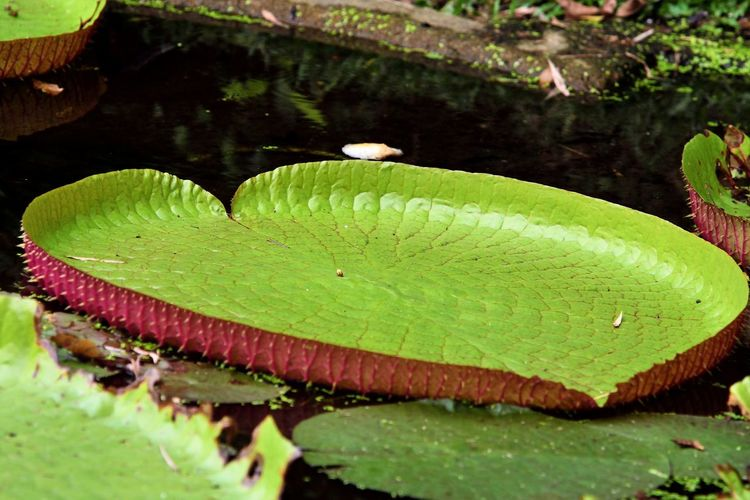 Wildlife and forestry Beauty In Nature Close-up Floating Floating On Water Freshness Fungus Green Color Growth Lake Leaf Leaves Lotus Water Lily Mushroom Nature No People Outdoors Plant Plant Part Water Water Lily