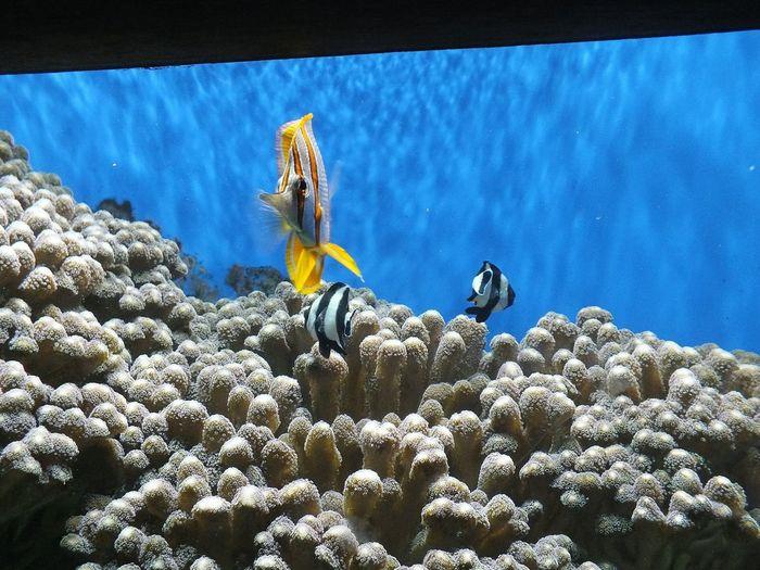 Blue Underwater