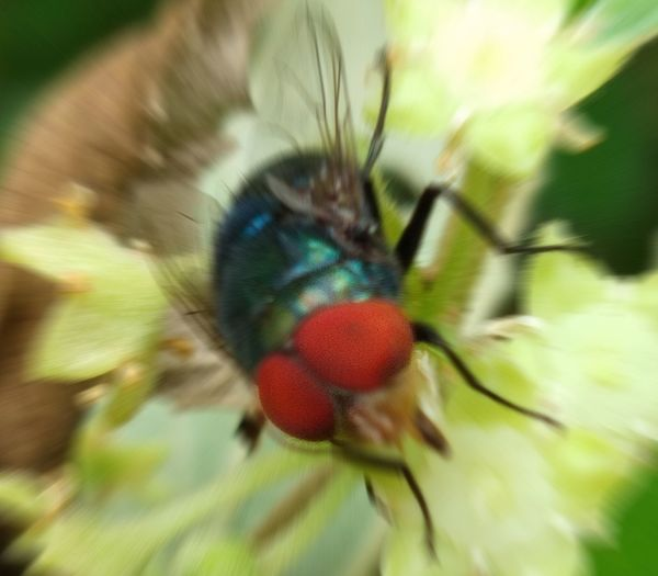 Flower Insect