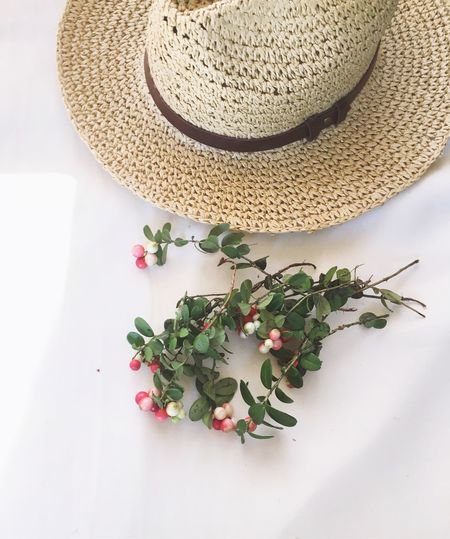 High angle view of hat and plant on white table