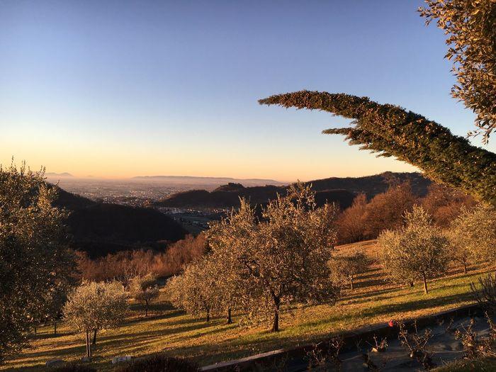 Ravano panorama with the wind power on the right. 18 january 2018 Pianurapadana Hills Visitveneto Vento Cipresso Wind Marostica Tree Landscape Nature Beauty In Nature Scenics Clear Sky Tranquil Scene