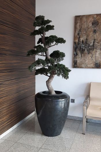 Bonzai Day Fake Tree Growth Home Interior Indoors  No People On The Corner Painting Plant Pot Sofa Tree Wall Wooden Texture Showcase March Interior Design Interior Views Wall Art Wood Texture Modern Decoration Interior Style Interior Decorating Decorations