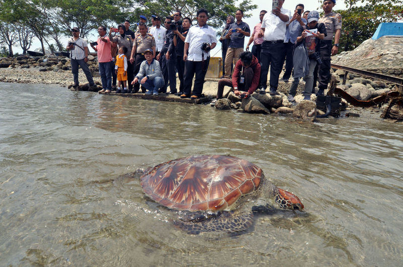 Indonesian release Sea Turtle_ Crowd Day Group Of People Land Large Group Of People Leisure Activity Marine Men Nature Outdoors Real People Sea Sea Life Spectator Underwater Watching Water Waterfront Women