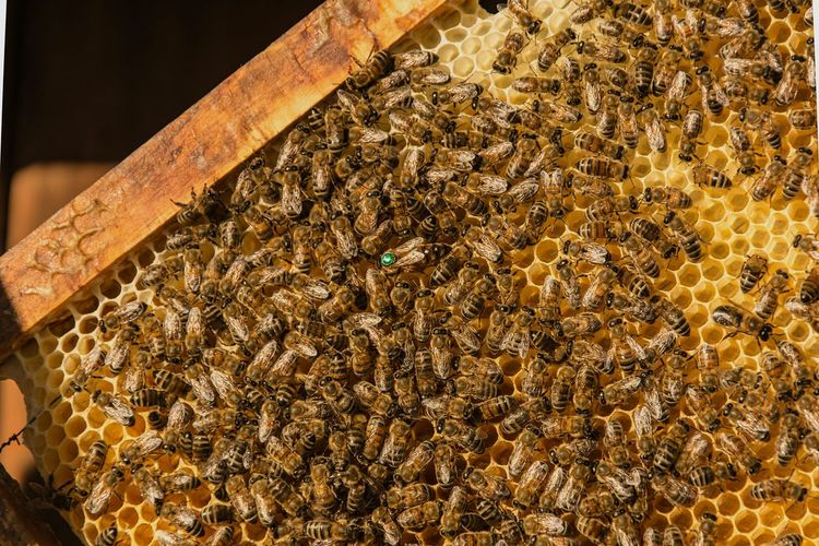 High Angle View Of Honey Bees On Hive