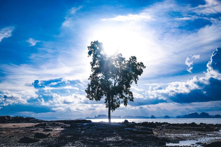 Silhouette tree on landscape against sky
