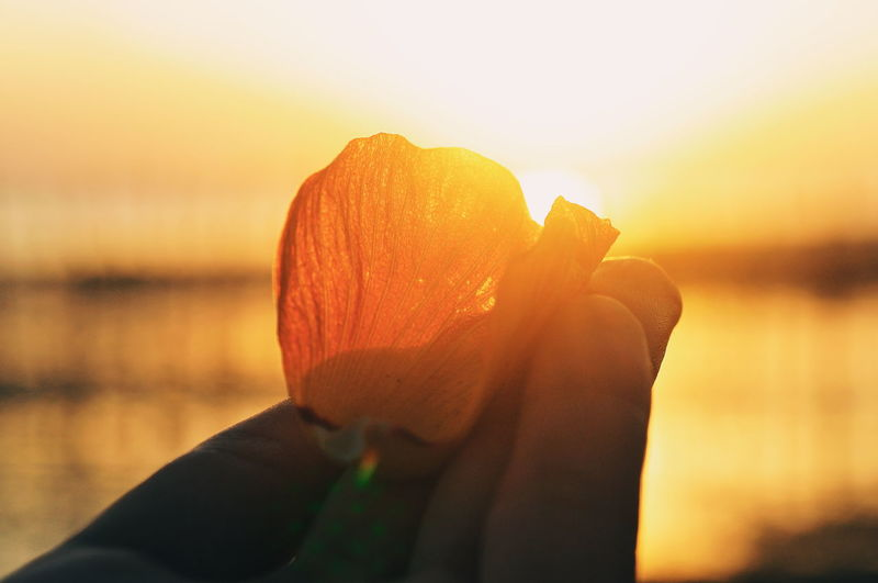 Love EyeEm Nature Lover EyeEm Selects EyeEm Best Shots Mood Illustration Terapy Sunset_collection Flower Flower Collection Flower Head Human Hand Water Sunset Winter Women Beach Heat - Temperature Sea Holding Sun Orange Color Silhouette
