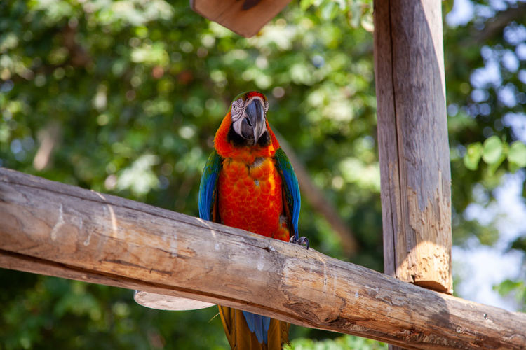Low angle view of parrot perching on branch