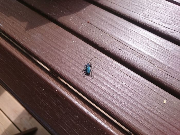 Bug on the table Bug Table Beetle Purist No Edit No Filter Smartphone Photography Outdoor Photography Insect