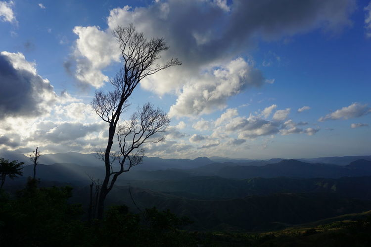 Atop of a mountain. Nature Tree Cloud - Sky Outdoors Beauty In Nature Travel Photography Philippines Choosephilippines Hiking Adventures Adventure Explore Sonyxperiaphotography Sonyimages Pinasmuna ExplorePH Mountains And Sky Mountainscape Sonyxperia SonyXA Sunrise