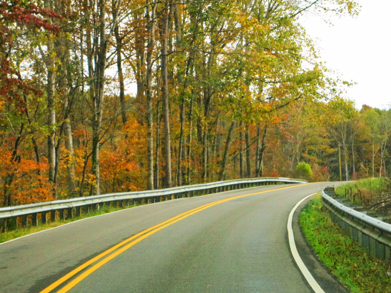 How beautiful it is to drive around during autumn. Colorful Leaves Traveling Trees Asphalt Autumn Beauty In Nature Colorful Leaves In Autumn Colorful Tree Curve Day Dividing Line Driving Around Driving Home Forest Leaf Nature No People Outdoors Riding Road Road Trip Scenics Tree Winding Road