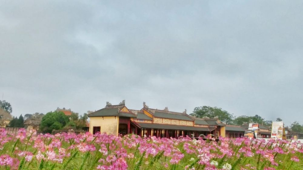 Millennial Pink Flower Nature Beauty In Nature Sky No People Fragility Cloud - Sky Outdoors Day Flower Head Architecture Citadel Huế EyeEmNewHere Postcard Purplehiddenkingdom Vietnam Art Is Everywhere