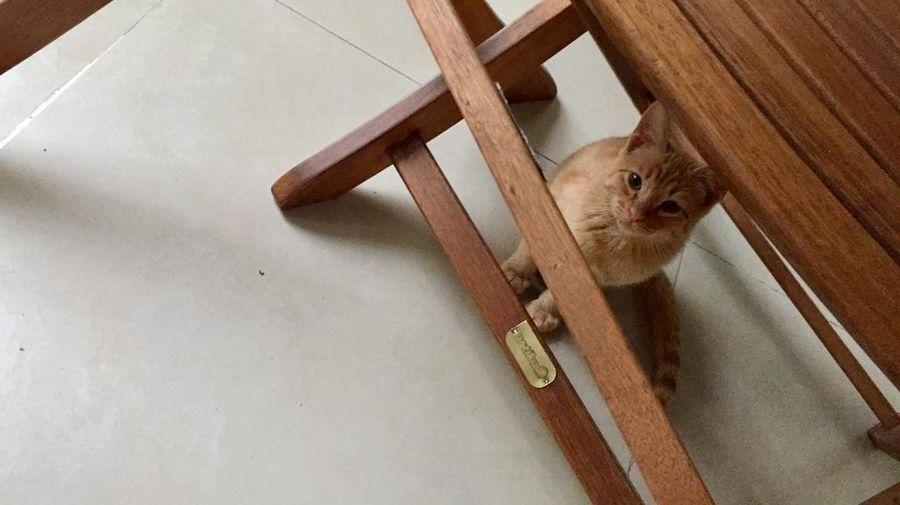 Gatos Gatitos