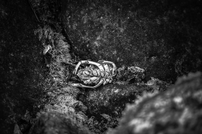Black And White Dead Long Gone  Decaying Crawfish Remains River Nature Close-up Outdoors Day No People