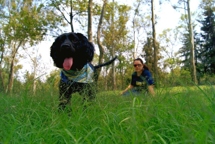 Grass Outdoors Friendship Day Dog❤ Chapultepec CDMX EyeEmNewHere