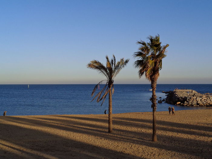 walking by the sea in Barcelona Barcelona Beach Beachphotography Beauty In Nature Clear Sky Day Horizon Over Water Nature No People Outdoors Palm Tree Sand Scenics Sea Shadow Sky Tree Water An Eye For Travel EyeEmNewHere
