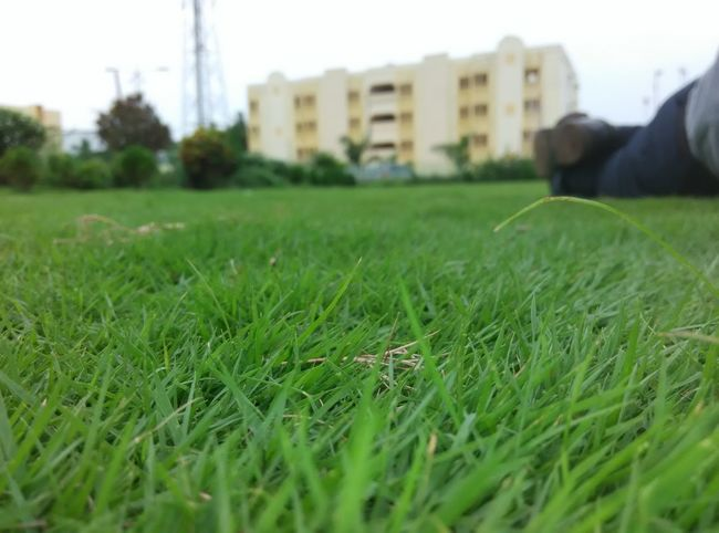 Alone Bulding Close Up Close-up Day Field Focus Focus On Foreground Full Frame Grass Grassland Grassy Green Green Color High Angle View Individuality Lawn Lifestyles Low Perspective Outdoors Perspective Selective Focus Summer Togetherness Tower