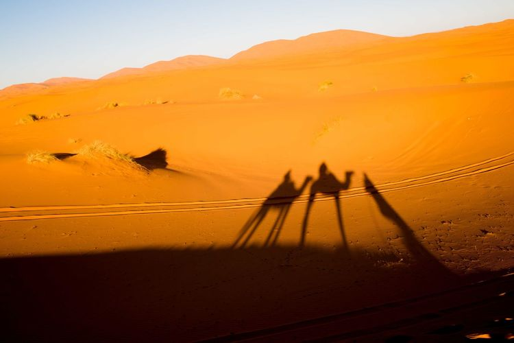 Silhouette Of Camels On Desert