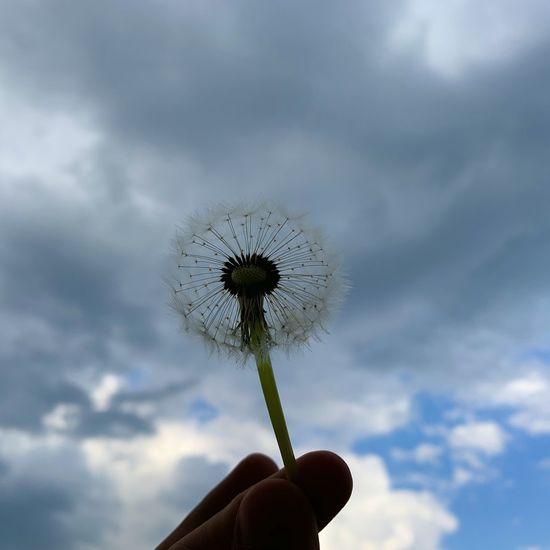 Hand holding dandelion against sky