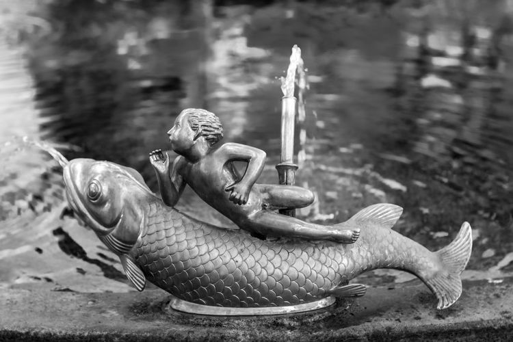Linsen über Zürich Fish Sculpture Art Waterspout Fountain Water Monochrome Blackandwhite Water Beach Close-up Sea Life
