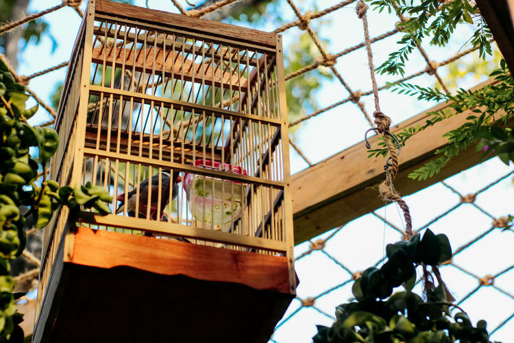 Low angle view of cage hanging from tree