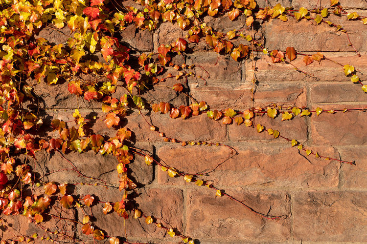High angle view of autumn leaves on rock