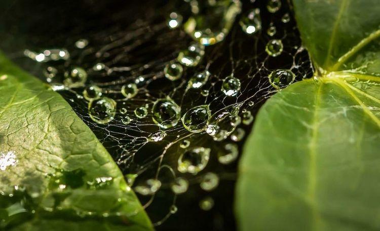 Nature Rain Drops