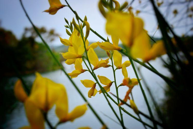 Blurred Yellow