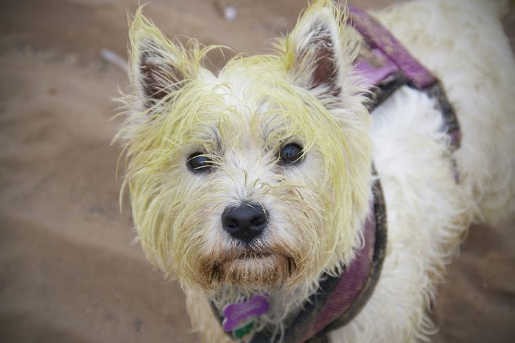 Dog Westie Wells-next-the-Sea Punk dog Algae Summer Dogs