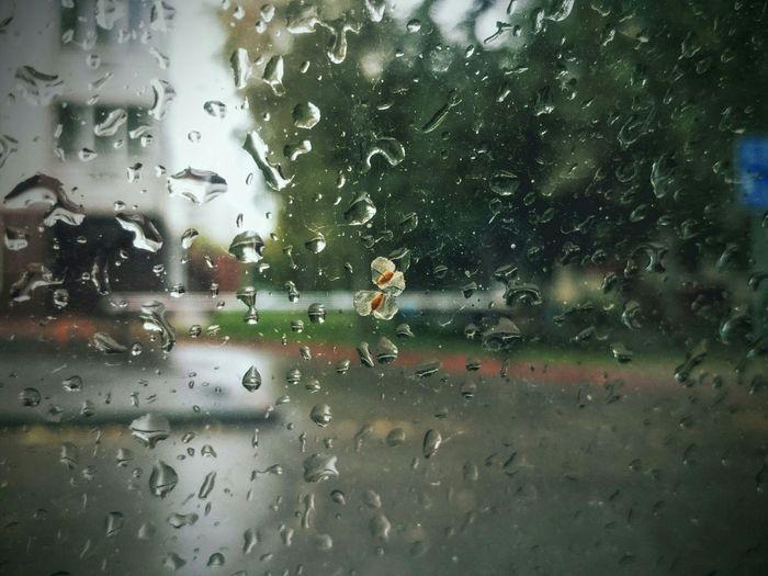 Rain Autumn Relaxing дожди☔