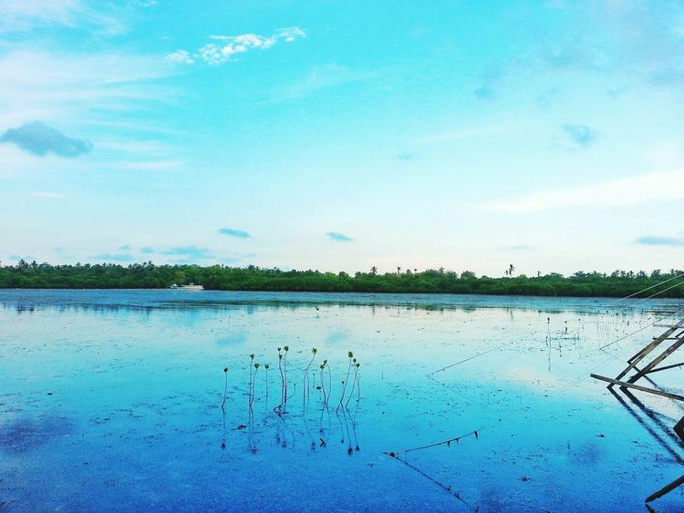 Mangrove Swamp Eyem Gallery Eyemcollections Nationalgeographic Sundown Seascape Eyeem Philippines Enjoying Life