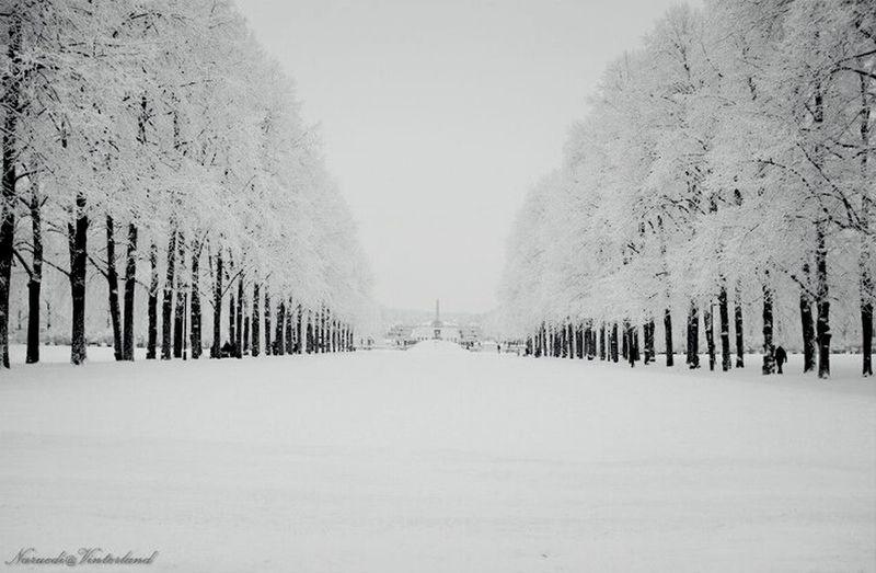 The fantastic winter