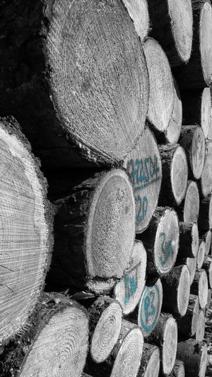 Wood No People Outdoors Close-up Nature Black And White Blackandwhite Photography