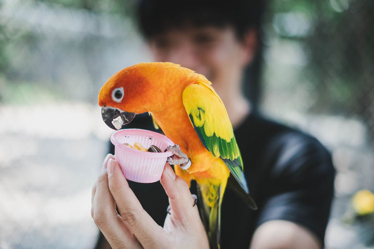 Close-up of hand feeding parrot