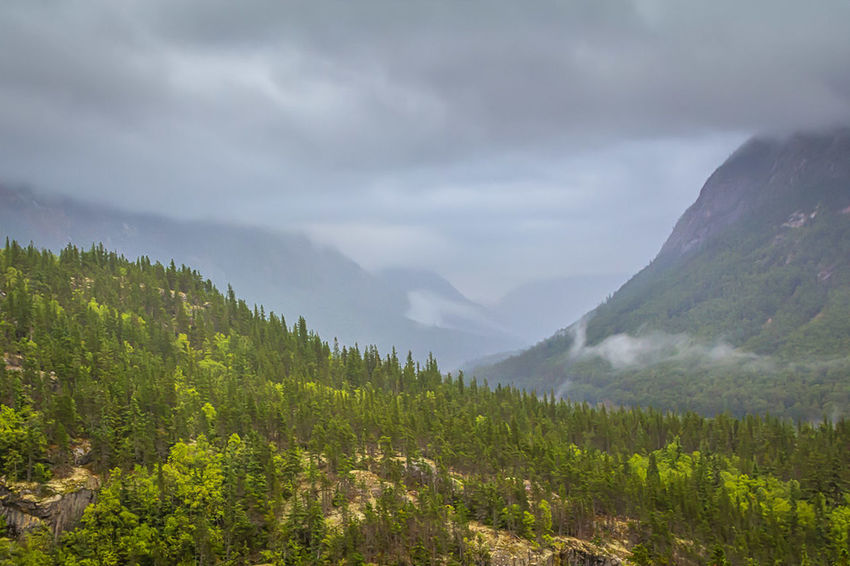 The Foggy Valley - A foggy valley among the mountains just northeast ofSkagway, Alaska. Alaska Landscape