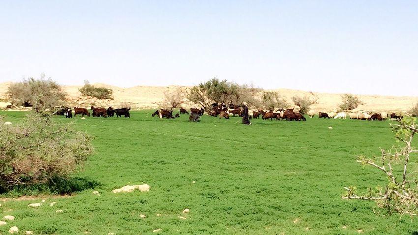 Saudi Arabia رفحاء Nice Day Nice Weather Relaxing Winter Snapchat Enjoying Life People Watching Taking Photos تصويري  Desert Life Desertsafari