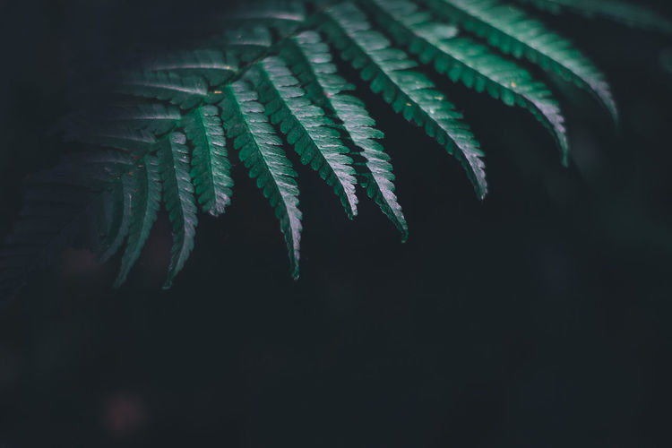 Travel Traveling Bali Bali, Indonesia Thailand Summer Nature Outdoors Green Color Leaf Plant Plant Part Growth Close-up No People Beauty In Nature Selective Focus Night Fern Fragility Vulnerability  Focus On Foreground Freshness Natural Pattern Palm Leaf