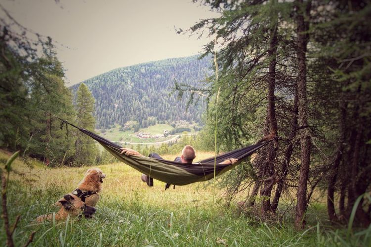 Dog sitting by man resting in hammock at forest